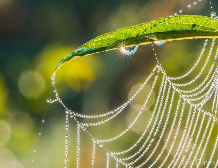 Spider+Webs-8118